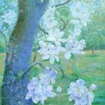 blomstrende æbletræ 100x80 cm