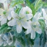 anemoner , akvarel af kunstmaler Birgitte NIelsen