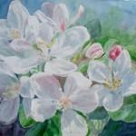 æbleblomster , akvarel af kunstmaler Birgitte NIelsen