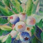 blåbær, akvarel af kunstmaler Birgitte NIelsen