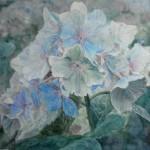 hortensia, akvarel af kunstmaler Birgitte NIelsen