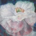 hvid valmue, akvarel af kunstmaler Birgitte NIelsen
